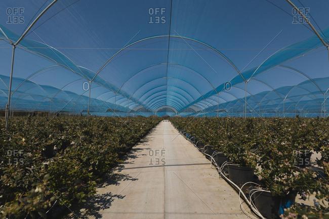 Interior view of modern blueberry farm