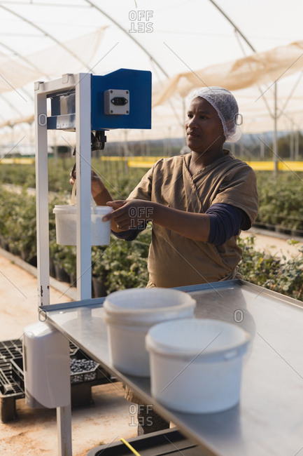 Worker using weighing machine in blueberry farm