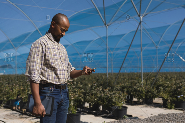 Man using mobile phone in blueberry farm on a sunny day