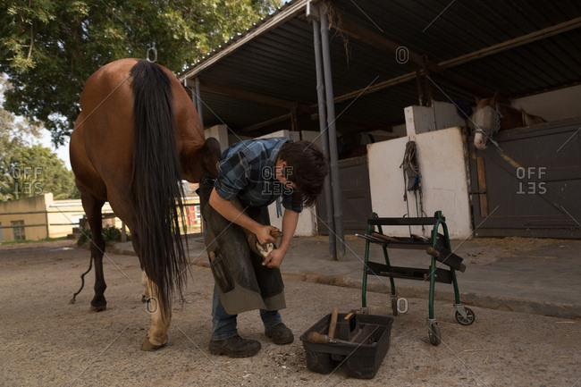 Woman putting horseshoes in horse leg at stable