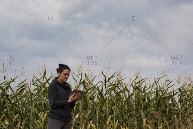 Woman using digital tablet in the corn field