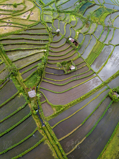 Aerial view of rice terraces in Tegallalang, Bali, Indonesia
