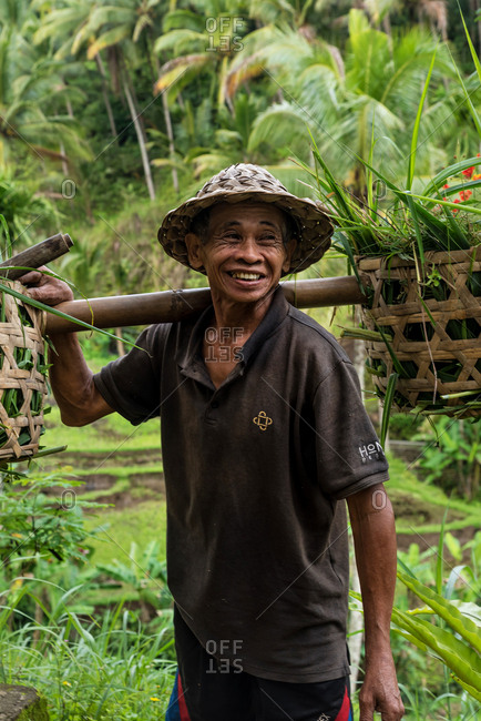 July 5,2018: Farmer harvesting the rice terraces in Tegallalang, Bali, Indonesia