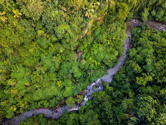 Aerial view of a river in the jungle in Bali, Indonesia