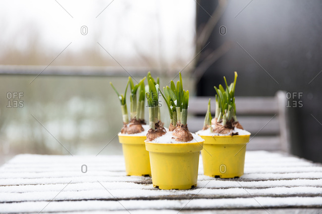 Snow covered flower pots with shooting bulbs