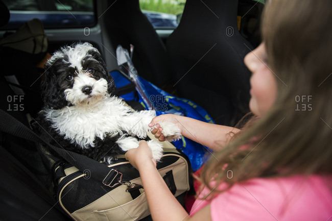 Girl holding the paws of her pet dog in a travel carrier in the car
