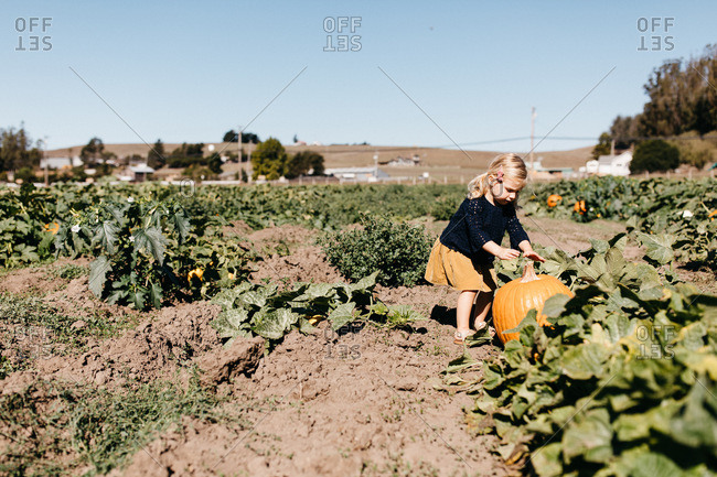 Young girl in a pumpkin patch