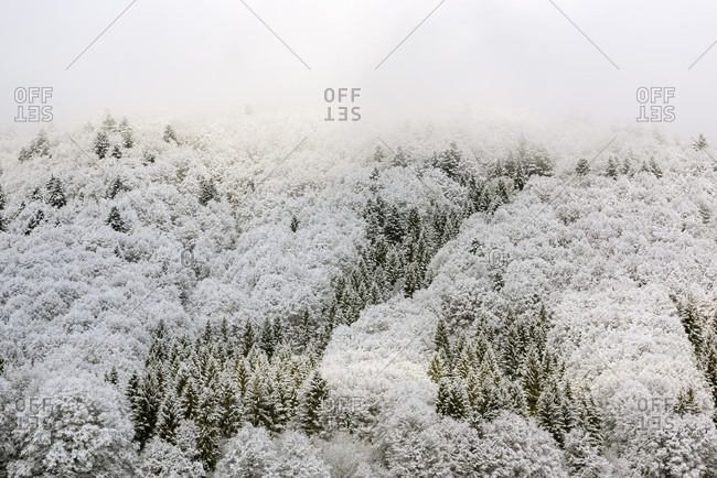 Winter in the Cansiglio Forest, Italy. The previous night, a light snowfall accompanied by intense cold crystallized the ice even on the smallest sprig. At dawn the fog swept fast through the folds of the wood by adding magic to magic. For short moments the light has opened a gap between the clouds illuminating the woods.