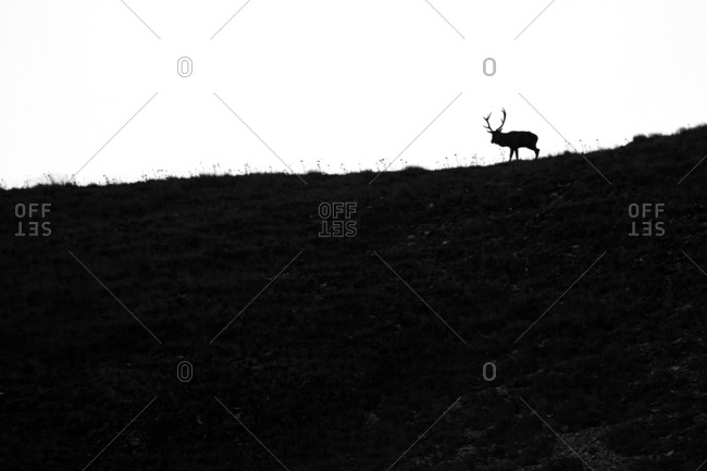 Deer silhouette set inside the National Park of Lazio Abruzzo and Molise, Italy