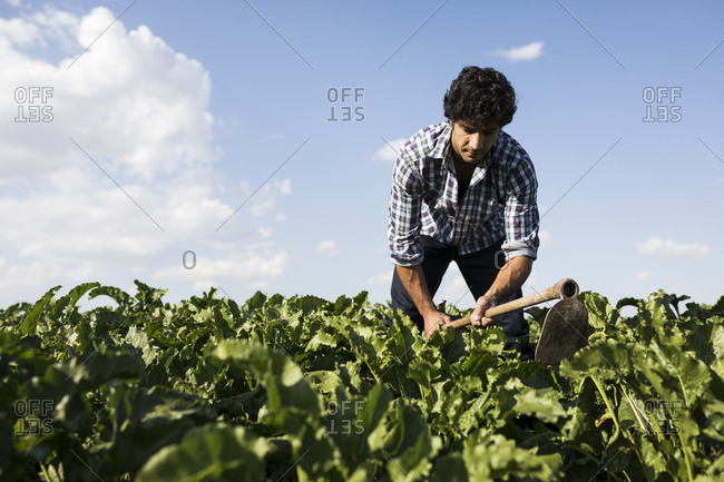 Man in casual outfit working in farm field on sunny day in Salamanca, Spain