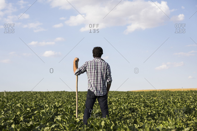 Back view of a man in casual outfit standing amidst green plants in beautiful farm field in Salamanca, Spain