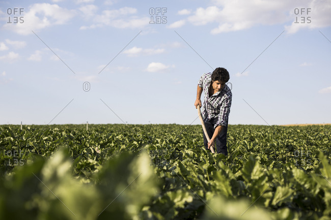 Man working in a farm field on sunny day in Salamanca, Spain