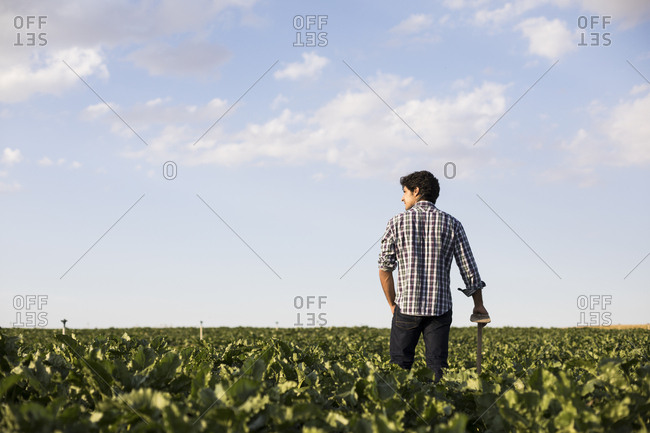 Back view of a man in casual outfit looking away standing in a farm field at sunset in Salamanca, Spain
