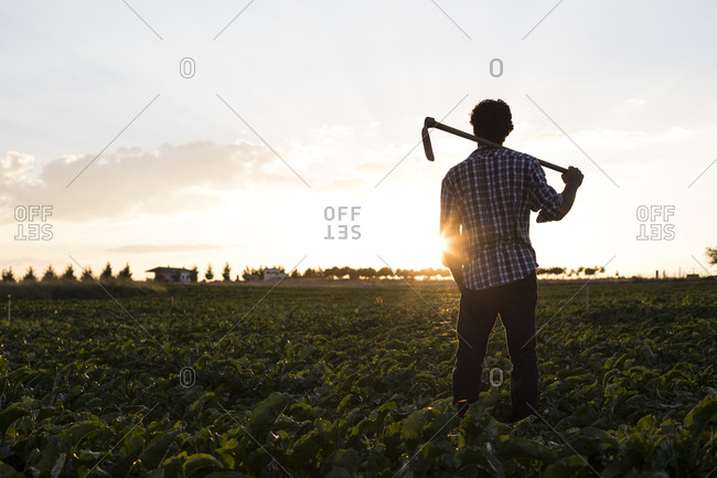 Back view of a man with hoe standing in farm field against evening sky in Salamanca, Spain