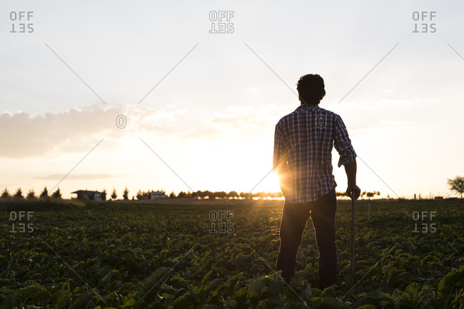 Rear view of a man with hoe standing in farm field against evening sky in Salamanca, Spain