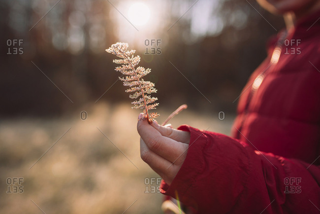 Young girl holding dried flowers in a frost covered meadow