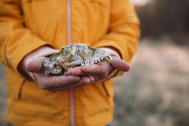 Young boy holding animal bones in the forest in the late fall