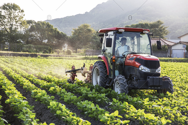Japanese farmer driving red tractor through a field of soy bean plants.