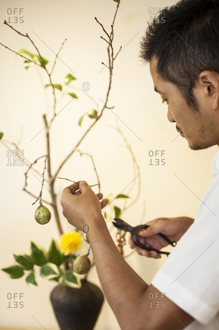 Japanese man standing in flower gallery, working on Ikebana arrangement, using pruning shears.