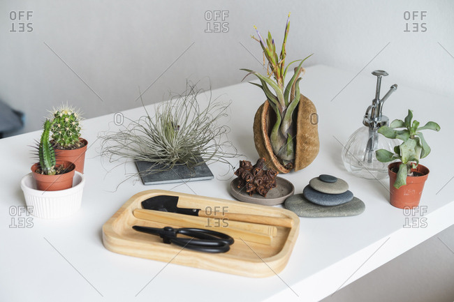 Variation of succulent plants and gardening equipment at home