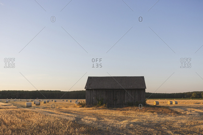 Barn on a field at harvesttime in the evening