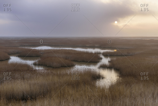 France- Le Havre- Seine River marsh with reed grass at sunrise