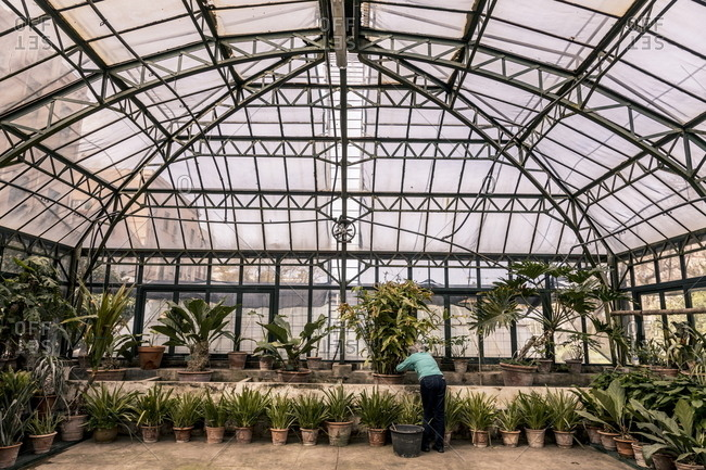 Interior of greenhouse at botanical gardens in Palermo, Italy