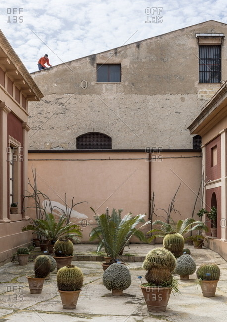 Palermo, Italy - March 8, 2018: Display of cacti and ferns growing in pots at botanical gardens