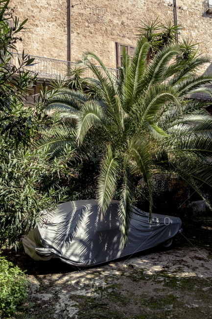 Covered car parked under a palm tree in Palermo, Italy