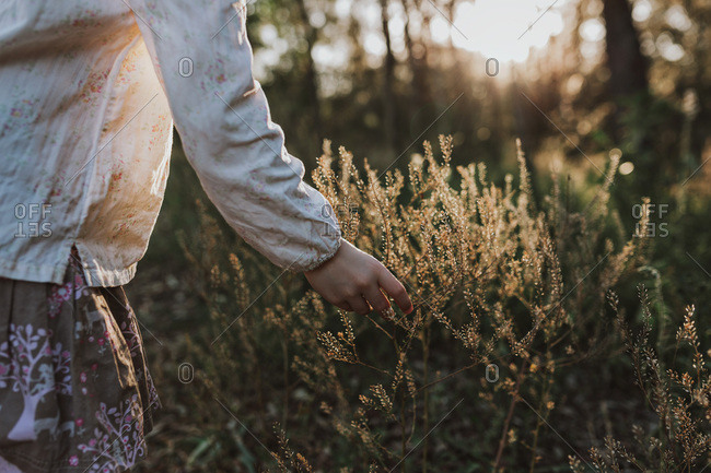Young girl picks a native flower from a bush in the golden afternoon light.