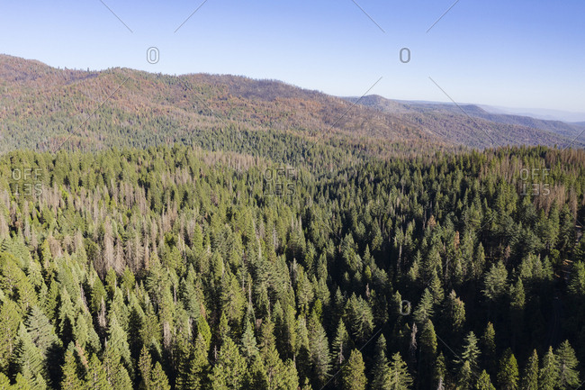 Landscape view of treetops in the Sierra Nevada Forest