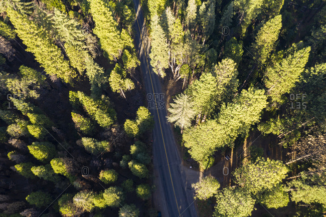 Aerial view of the Sierra Nevada Forest