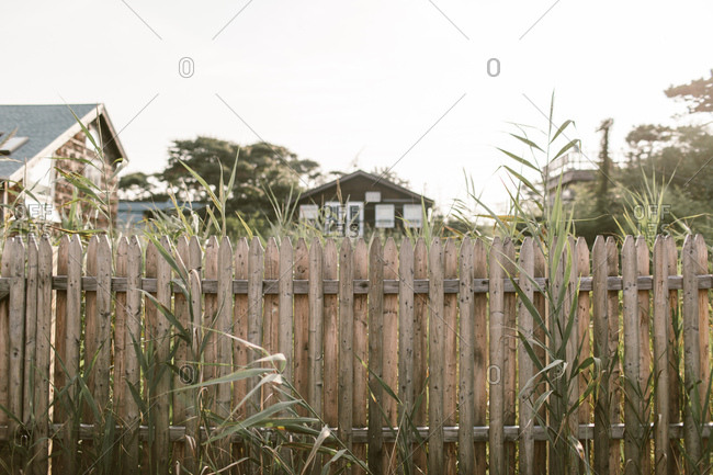 Wooden fence and overgrown back yard