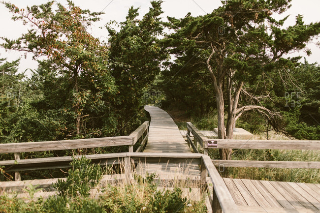 Tree-lined boardwalk on New York Seashore