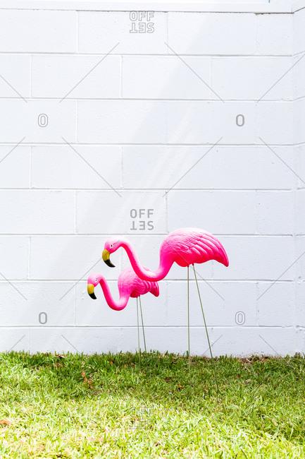 Two pink flamingos in backyard