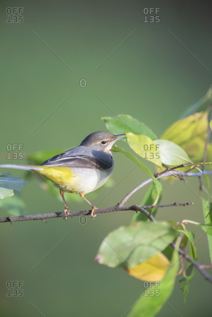 Small bird perched on a tree
