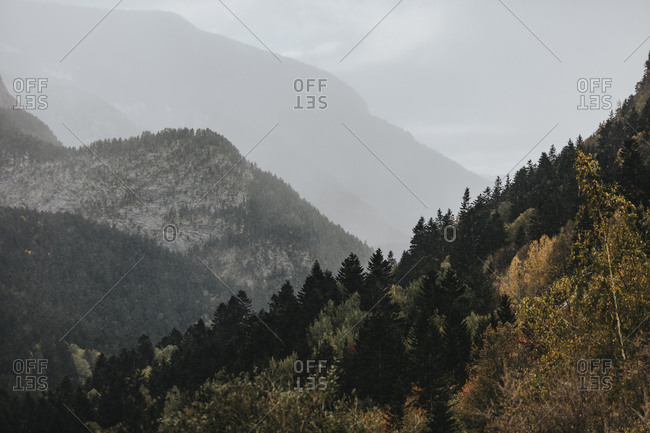 Dense mountainside forest in late fall