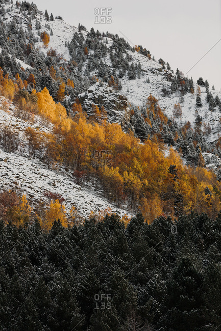 Colorful mountainside forest in late fall