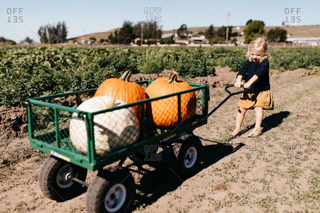 Little girl struggling to pull a cart filled with large pumpkins