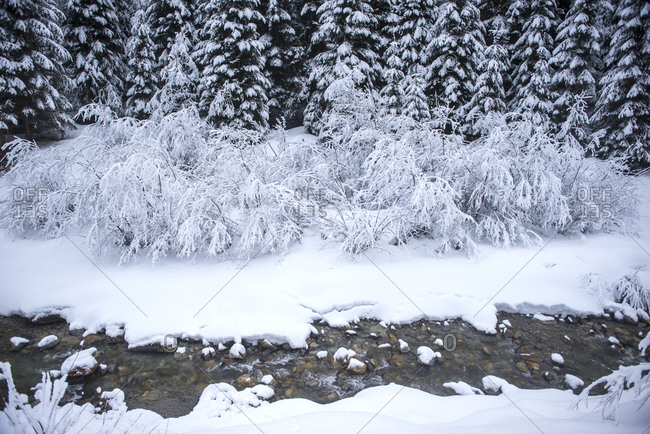 Austria- Salzburg State- Altenmarkt-Zauchensee- snowy bushes on a brook