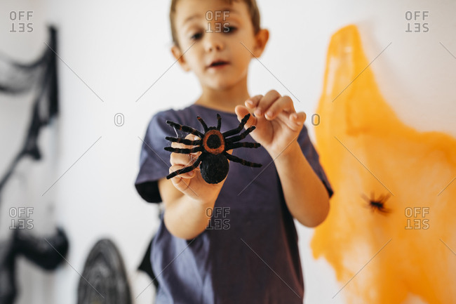 Little boy holding toy spider