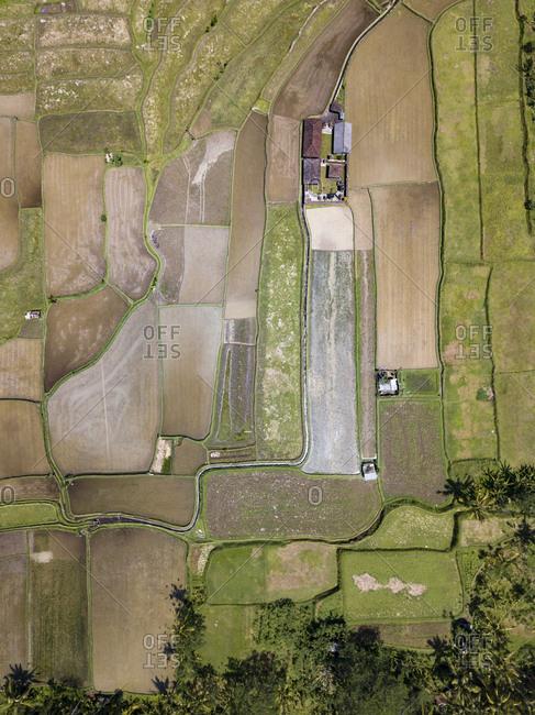 Indonesia- Bali- Ubud- Aerial view of rice fields