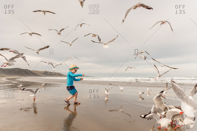 Boy playing with birds on a beach