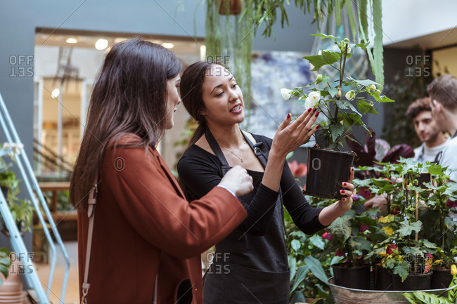 Female owners showing flower plant to mid adult customers at store