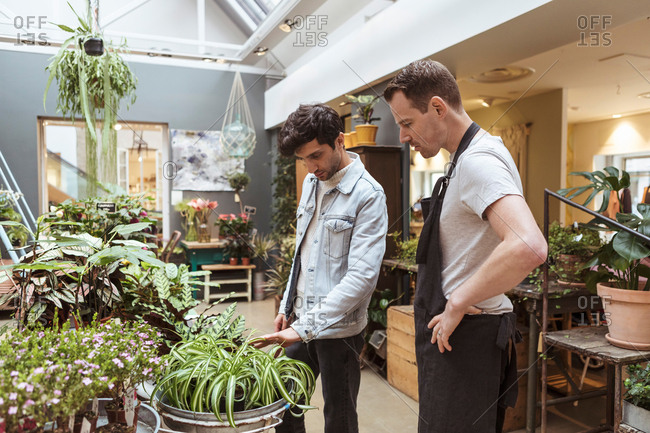 Young man discussing with male owner over potted plant at store