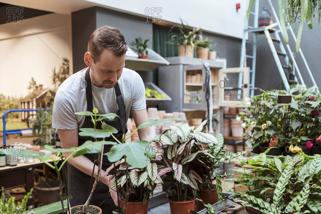 Male owner with potted plants at store