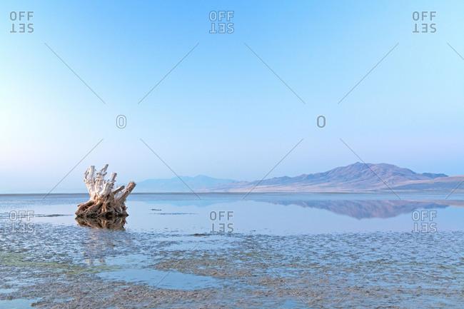 Antelope Island, tree stump, Great Salt Lake, Utah, the USA