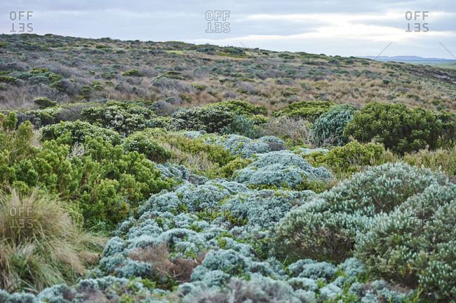 Landscape at the Twelve Apostles, Great Ocean Road, Port Campbell National Park, Victoria, Australia, Oceania