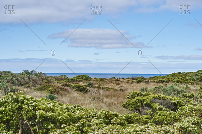 Landscape, Bushland near the Great Great Ocean Road, Sea in the background, Spring, Victoria, Australia, Oceania