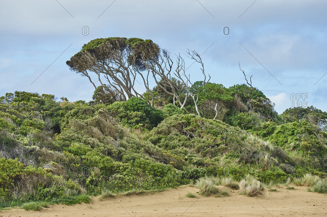 Bushland at the Great Ocean Road next to the beach in Spring, Melbourne, Victoria, Australia, Oceania